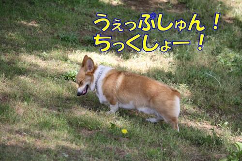 153_new