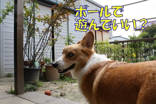 037_new_2