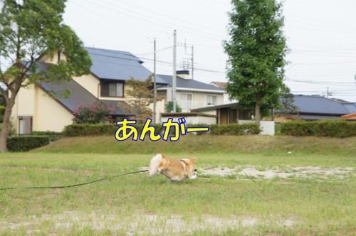 127_new