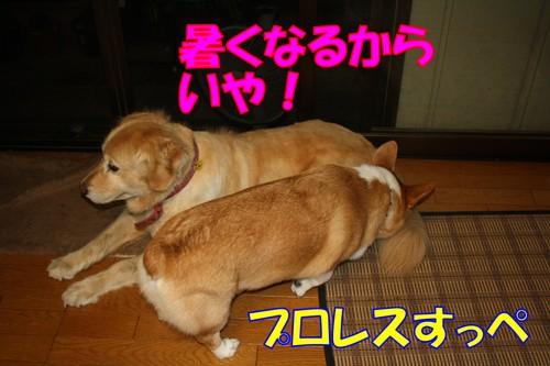 051_new