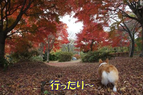 487_new