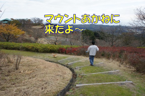 365_new