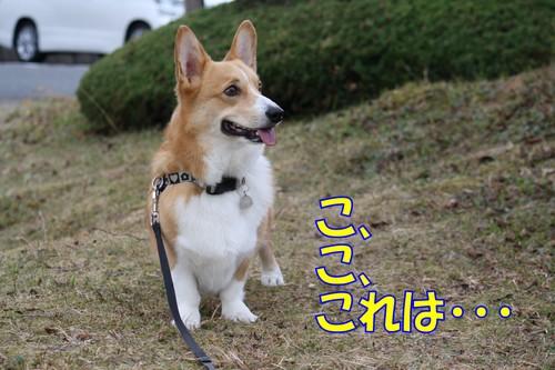568_new