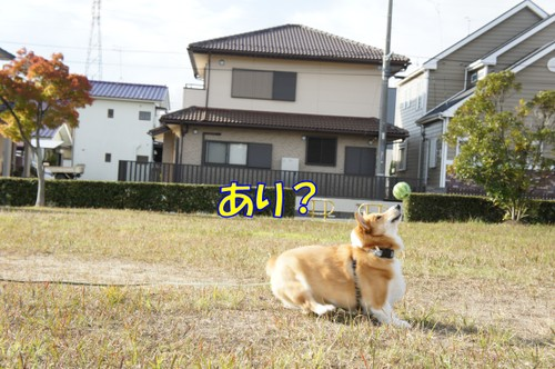 087_new