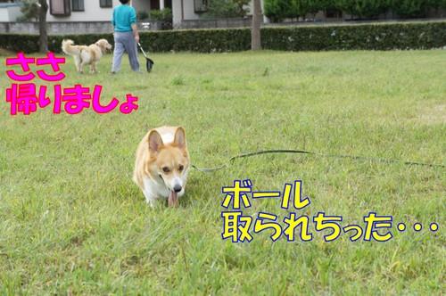 049_new