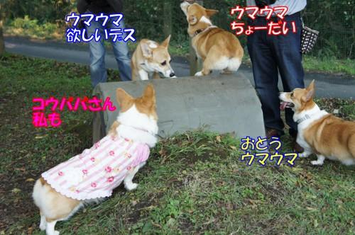 003_new_2