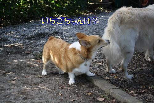 631_new