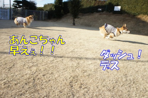 403_new