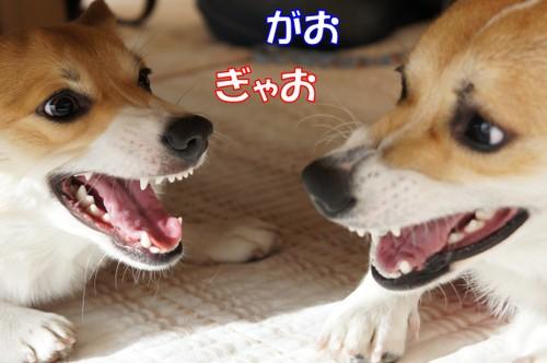 048_new