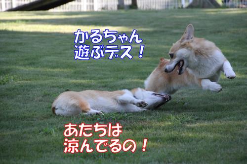 454_new