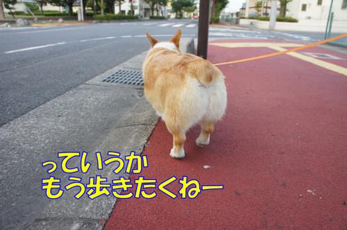 056_new