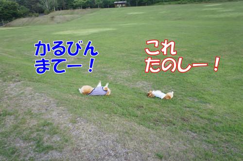 354_new_2