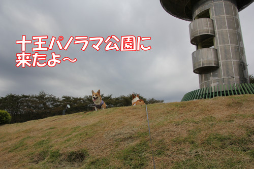 135_new