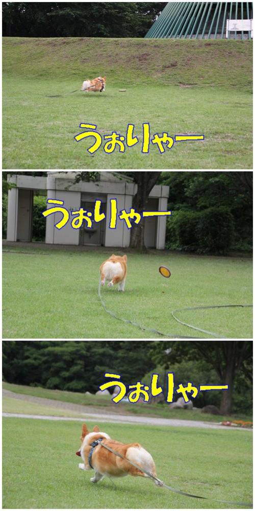 20110613_new