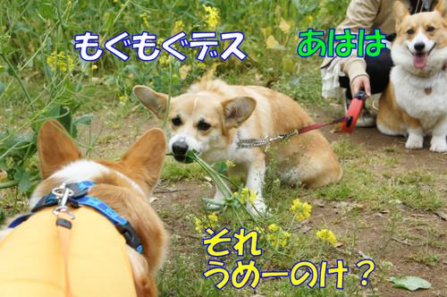 417_new