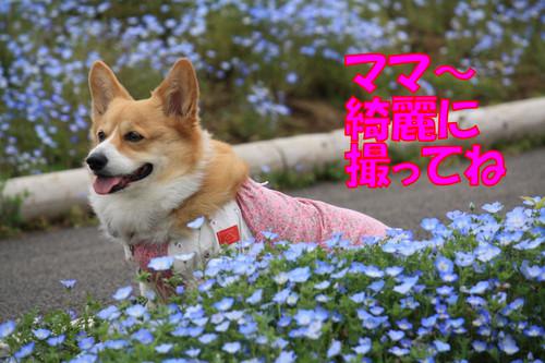 555_new
