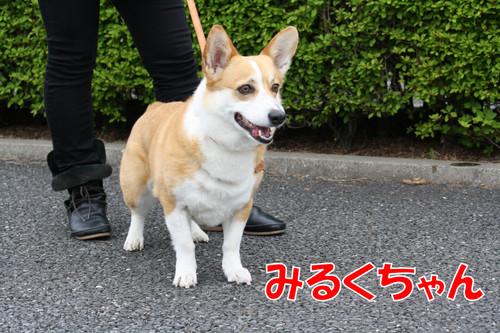 473_new