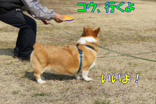 043_new
