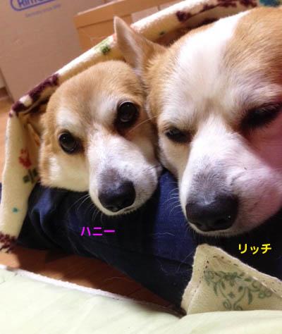甘えんぼ1