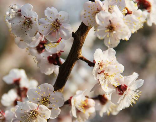 20140228梅の花