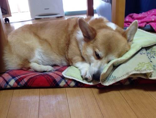 可愛い寝姿ハニー