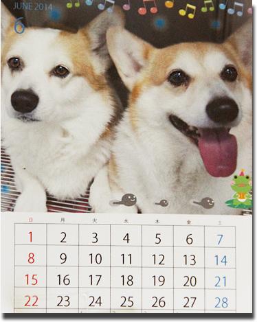 ハニッチカレンダー