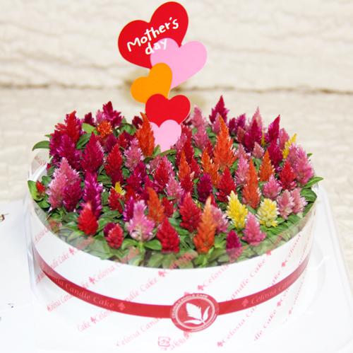 母の日お花のケーキ