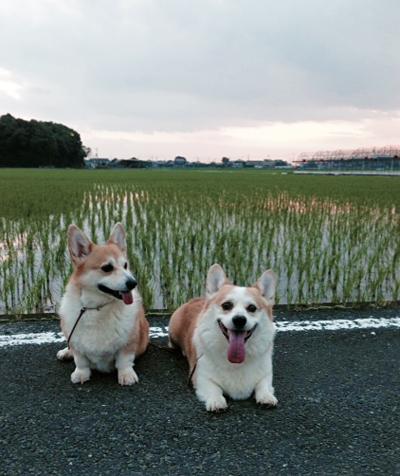 台風の後の散歩