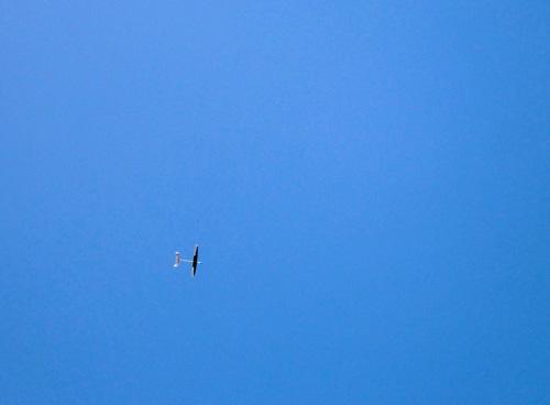ムービングワン飛行中。