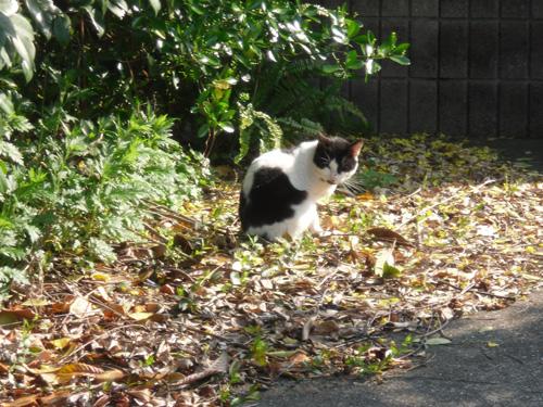 本日の猫発見!その2