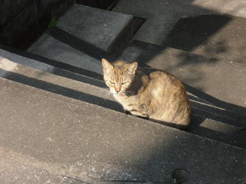 本日の猫発見!その4