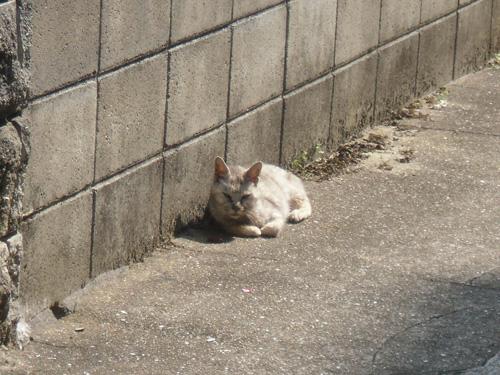 本日の猫発見!その6