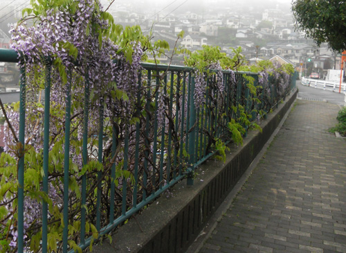 霧雨と花1