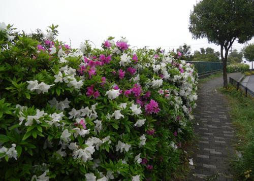 霧雨と花2