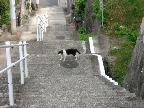 猫発見、おや?