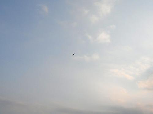 始祖鳥飛行中!