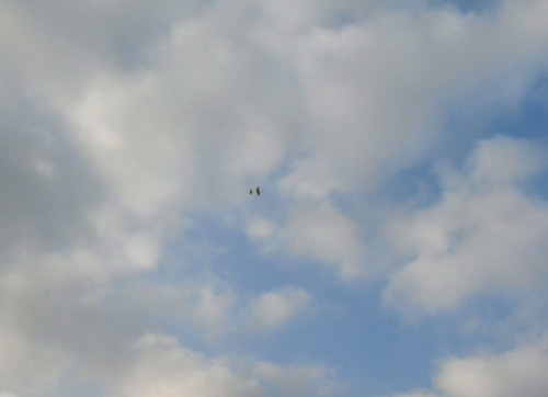 N-2482飛行中!