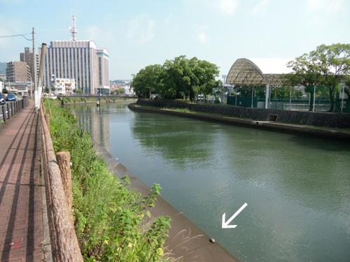 長崎市内の運動公園近くで。