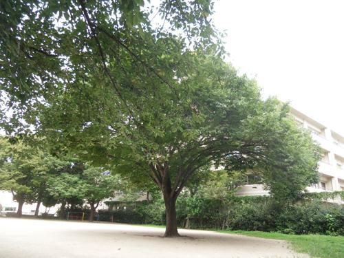 この木のコースだよ。