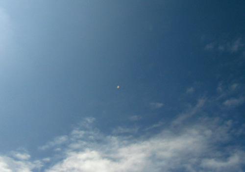 やっと飛んでる写真撮れたよ。