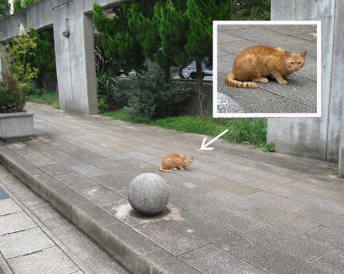 猫発見2。