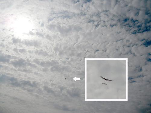 kh-16 オバハン飛行中~!その2