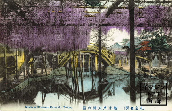 01-1317-022亀戸天神の藤 絵葉書