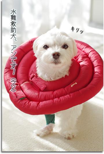 水難救助犬!