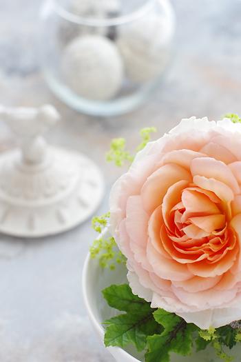 Mphoto6月薔薇