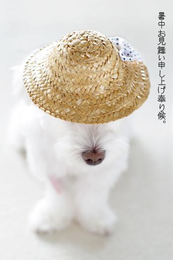 暑中お見舞い2014
