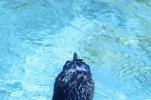 ペンギン頭