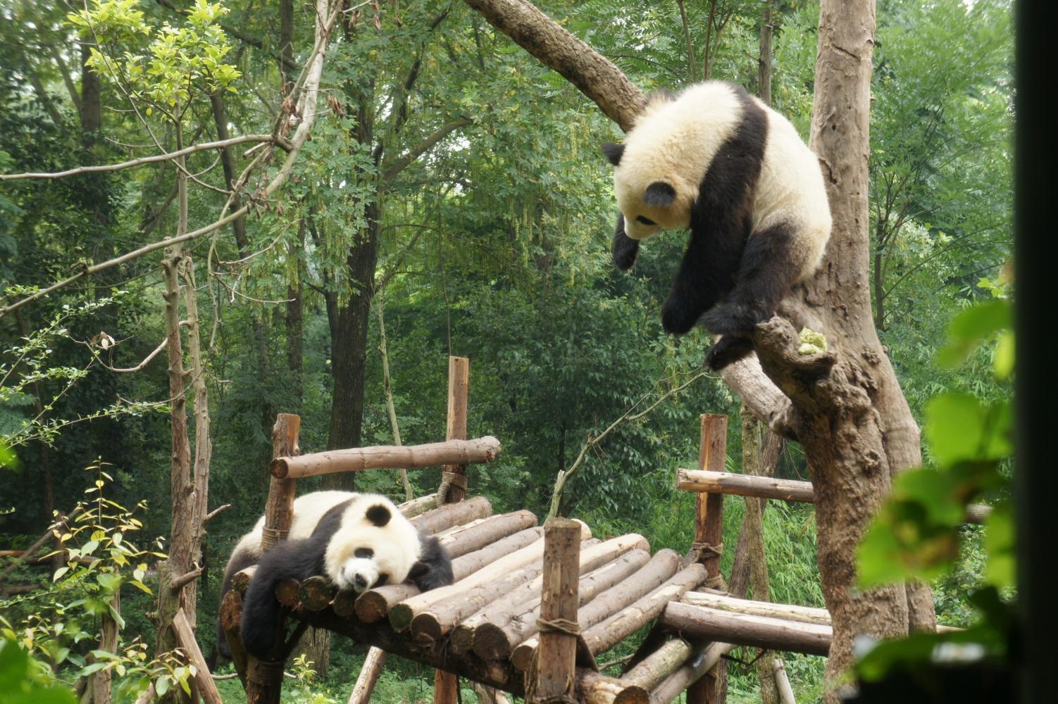 panda070.jpg
