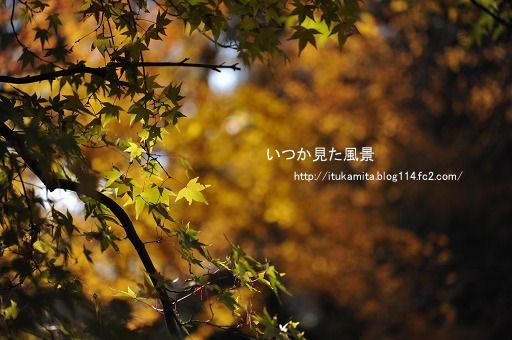 DS7_5571i-ss.jpg