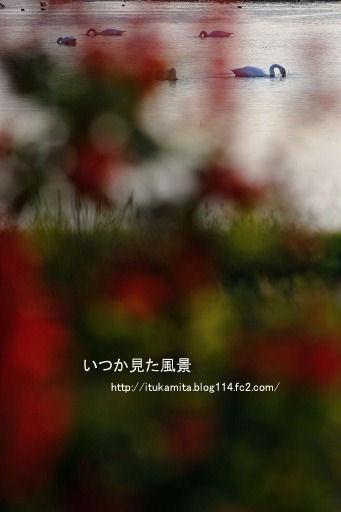 DS7_5940ri-ss.jpg
